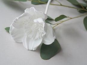 Poppy No. 4 in White Natural Versatile Plastic