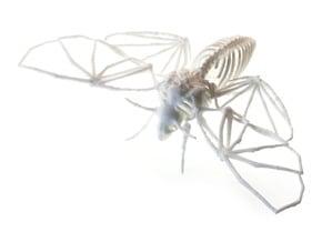 Death's Head Hawkmoth Skeleton in White Natural Versatile Plastic
