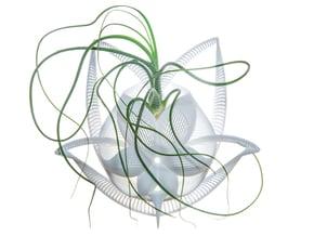 Bulbophyllum Gracilis Planter in White Natural Versatile Plastic