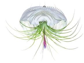 Bulbophyllum Ondulatus Planter in White Natural Versatile Plastic