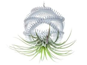Radiolaria Vertebralia Planter in White Natural Versatile Plastic