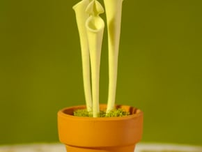 Pitcher Plant to be Potted in White Processed Versatile Plastic