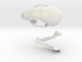 Skull of a stone marten in White Natural Versatile Plastic