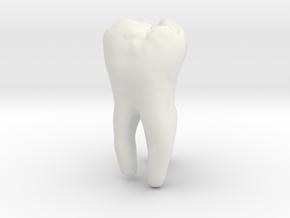 Molar Tooth 200mm-1 ---Backenzahn 200mm-1 in White Natural Versatile Plastic