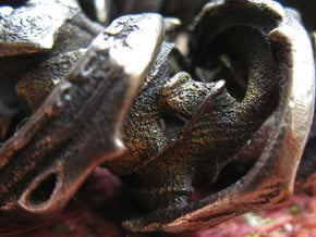 Trachoid II in Polished Bronze Steel