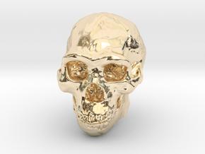 Lanyard : Real Skull (Homo erectus) in 14K Yellow Gold