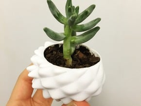 Bumpy Succulent Planter - Small in White Processed Versatile Plastic