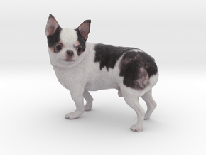 Scanned Chihuahua Dog -892 in Full Color Sandstone