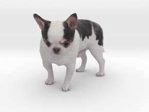 Scanned Chihuahua Dog -891 in Full Color Sandstone