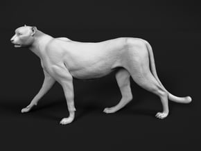 Cheetah 1:16 Walking Female 2 in White Natural Versatile Plastic