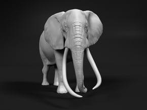African Bush Elephant 1:45 Tusker Bull Satao in White Natural Versatile Plastic