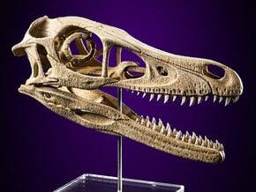 Velociraptor - dinosaur skull replica in White Natural Versatile Plastic: Medium