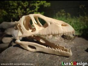 Dino Skull - Raptor Replica in White Natural Versatile Plastic