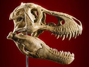 Tyrannosaurus skull - dinosaur model in White Natural Versatile Plastic: 1:20