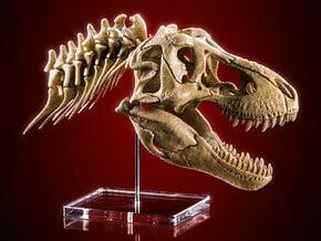 Tyrannosaurus - dinosaur skull and neck vertebrae in White Natural Versatile Plastic: 1:20