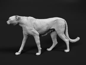 Cheetah 1:20 Walking Male 5 in White Natural Versatile Plastic