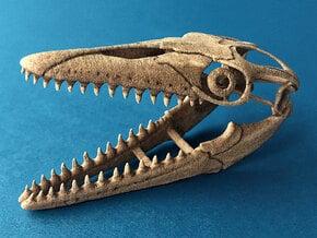Mosasaurus skull in White Natural Versatile Plastic: 1:20