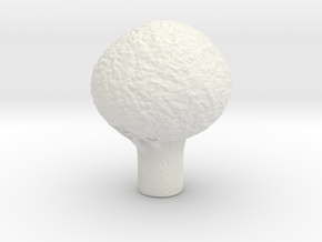 Tree Test 2 in White Natural Versatile Plastic
