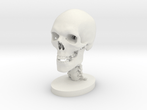 1/4 Scale Human Skull in White Natural Versatile Plastic