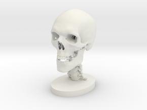 1/2 Scale Human Skull in White Natural Versatile Plastic