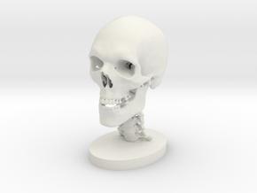 3/4 Scale Human Skull in White Natural Versatile Plastic