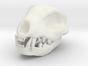 Cat Skull 1.5 Inches in White Natural Versatile Plastic