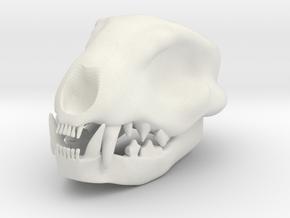 Cat Skull 4 Inch in White Natural Versatile Plastic