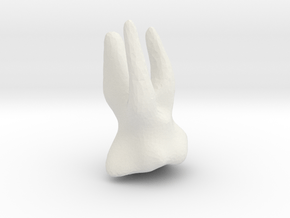 tooth 2 in White Natural Versatile Plastic