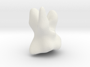 tooth in White Natural Versatile Plastic