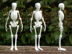 Free Standing Skeleton Figure in White Natural Versatile Plastic