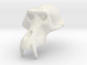 Monkey Skull - Trial 1  in White Natural Versatile Plastic