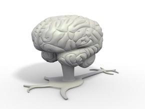 Brain in White Natural Versatile Plastic