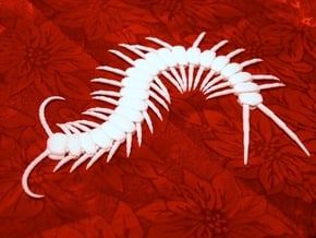 Articulated Centipede (Scolopendra sp.) in White Natural Versatile Plastic