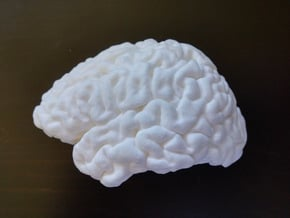 The left hemisphere of the brain - full scale in White Processed Versatile Plastic