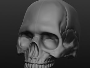 Human Skull (no jaw) 8 inch scale in White Processed Versatile Plastic