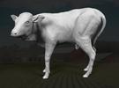 Ankole-Watusi 1:12 Calf in White Strong & Flexible