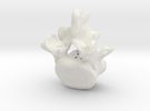 L5 lumbar vertebral body in White Strong & Flexible