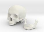 Skull scale 1/3