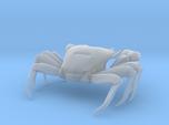 Articulated Crab (Pachygrapsus crassipes)