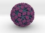 Feline Calicivirus radial colour 1Mx mag