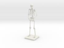 """6"""" Desktop Skeleton in White Strong & Flexible"""