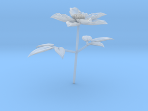 Clematis in Smooth Fine Detail Plastic