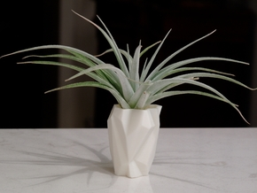 Ruba Rombic Vase for Air Plants in White Natural Versatile Plastic
