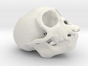Spider Monkey Skull 50mm in White Natural Versatile Plastic