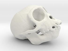 Spider Monkey Skull 50mm in White Natural Versatile Plastic