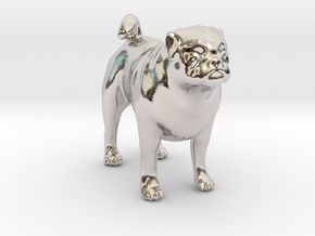 Standing Fawn Pug in Platinum