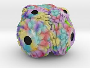 Coral camera in Full Color Sandstone