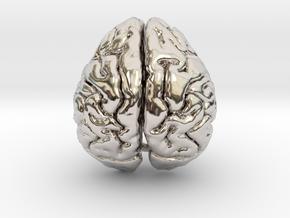 Orangutan Brain in Rhodium Plated Brass