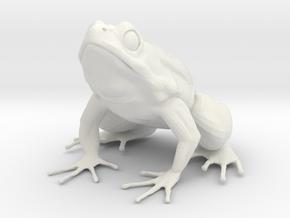 Common Frog  in White Natural Versatile Plastic