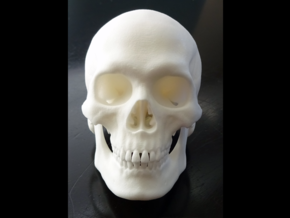 Realistic Human Skull With Removable Jaw V.2.00 in White Strong & Flexible